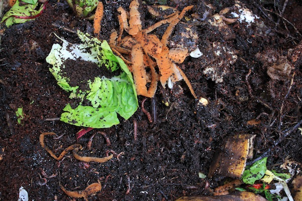 Foods That Are Good For Compost