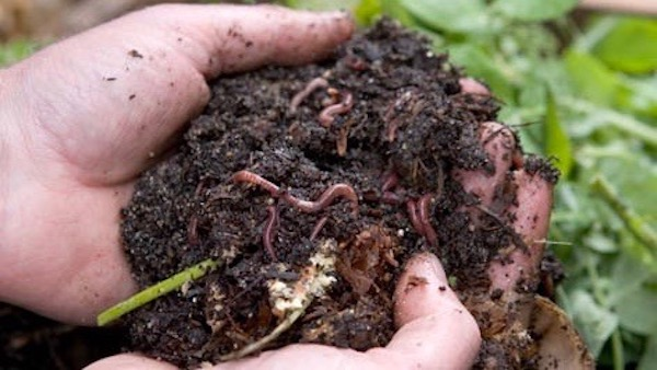 How to look after and feed your wormery - Vertical Veg