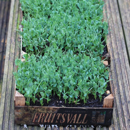 Ten Of The Best Crops To Grow In Containers