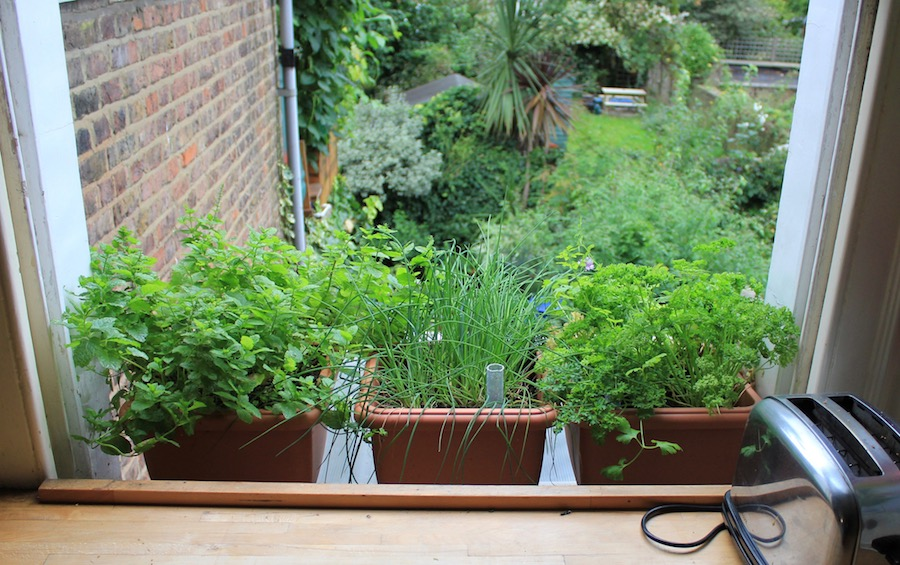 What Are The Perfect Plants For A Window Kitchen Garden